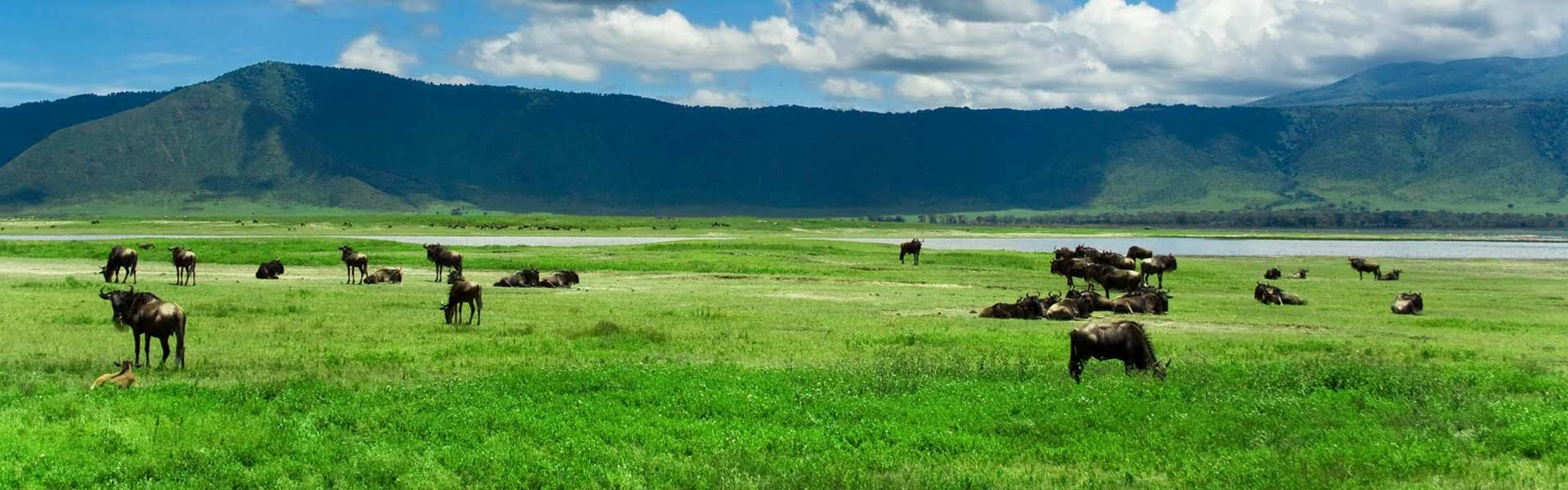 Animals grazing in Tanzania at the Ngorongoro Conservation Area