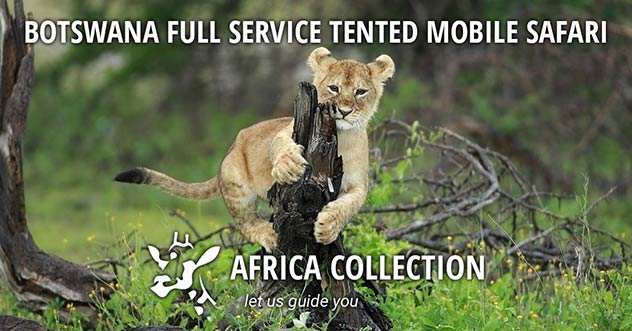 Botswana Full Service Tented Mobile Safari Travel Itinerary Package