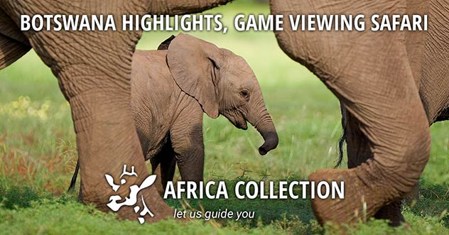 Botswana Highlights, Game Viewing Safari Travel Itinerary Package