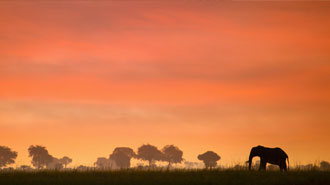 Chobe National Park elephant in the red sunset