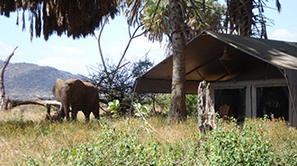 Elephant Bedroom Camp exterior