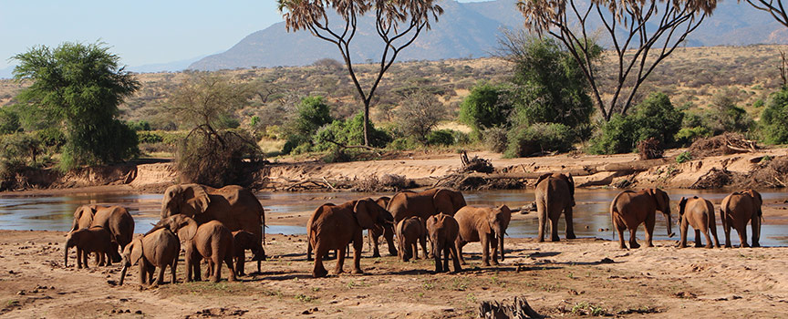 Elephant Bedroom Camp waterhole