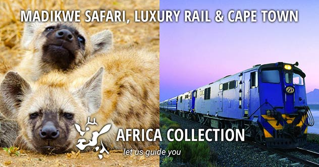 Madikwe Safari, Luxury Rail and Cape Town Travel Itinerary Package