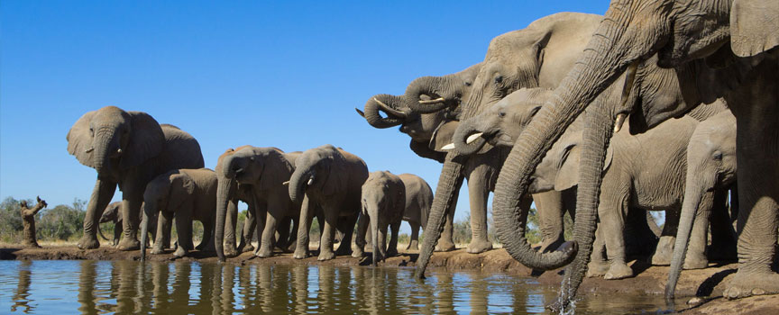 Moremi Game Reserve elephants at the waterhole