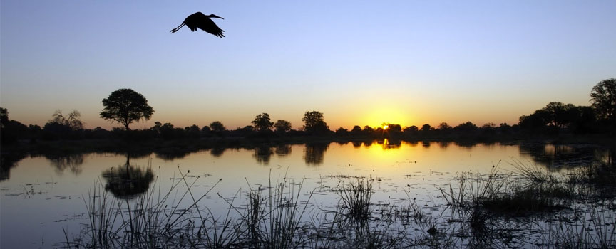 Moremi Game Reserve with prolific birdlife