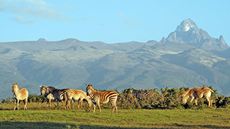 Samburu National Reserve landscape wildlife