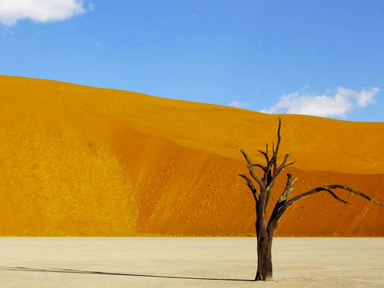 Dead Acacia tree in the Namibian red dunes