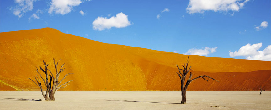 Sossusvlei acacia trees and red dunes